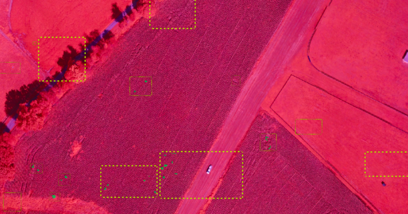 Weed Detection Using Machine Learning - A game-changer in agriculture - Picterra